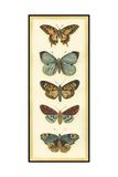 Small Butterfly Collector VI Poster von Chariklia Zarris