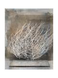 Desert Form V Prints by Elena Ray
