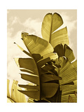 Palm Fronds IV Prints by Rachel Perry