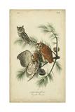 Audubon Screech Owl Arte por John James Audubon