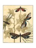 Small Graphic Dragonflies I Premium Giclee Print by Megan Meagher