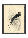 Printed Chimney Swallow Poster
