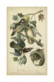 Audubon Wood Duck Prints by John James Audubon