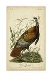 Audubon Wild Turkey Plakater af John James Audubon