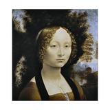 Ginevra De Benci, C. 1474-1478 Impressão giclée por  Leonardo da Vinci