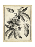 Passiflora III Print by Charles Francois Sellier