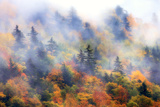 Fog over a Forested Hillside in New England Fall Colors Stampa fotografica di Robbie George
