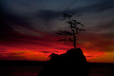 A Lone Tree Protrudes from a Rock in Silhouette Against a Fiery Sunset Sky in Garibaldi Fotografisk trykk av Vickie Lewis