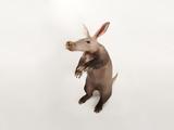 An Aardvark, Orycteropus Afer Lámina fotográfica por Sartore, Joel
