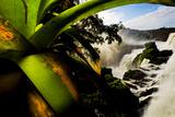 Bromeliad Leaves and Rainforest Waterfalls in Iguazu National Park Fotografisk tryk af Mattias Klum
