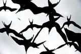 Frigatebirds Against a Thundercloud Sky Reproduction photographique par Mattias Klum