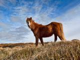 The Ride Reproduction photographique par Will Wilkinson