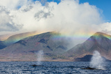 Humpback Whales Surface under a Rainbow over Distant Mountains Fotografisk trykk av Ralph Lee Hopkins