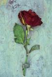 Deep Red Rose Fotografisk trykk av Den Reader