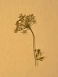 Nature Reproduction photographique par Will Wilkinson