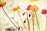 Poppies Dancing Fotoprint van Mia Friedrich