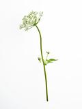 White Tears Reproduction photographique par Will Wilkinson