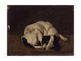Sleeping Dog Art by Arcangelo Resani