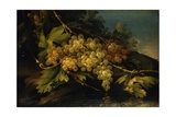 Still Life (Bunch of Yellow Grapes) Prints by Francesco Malagoli