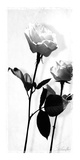 Blumen-Impressionen I Giclée-Druck von Lucy Meadows