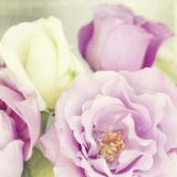 Bouquet II Giclee Print by Shana Rae