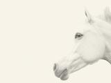 A Gusto Giclee Print by Shana Rae