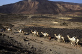 Salt Caravan in Djibouti, Going from Assal Lake to Ethiopian Mountains, Djibouti, Africa Fotografisk tryk af Olivier Goujon