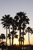 Palm Trees at Sunset, Playa De Los Amadores, Gran Canaria, Canary Islands, Spain, Atlantic, Europe Photographic Print by Markus Lange