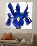 Purple Floral II Julisteet tekijänä Yvonne Poelstra-Holzaus