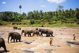 Pinnawala Elephant Orphanage Fotografisk trykk av Matthew Williams-Ellis