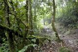 Shola Forest Interior, Eravikulam National Park, Kerala, India, Asia Impressão fotográfica por Balan Madhavan