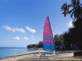 Sailing Boat on Paynes Bay, Barbados, Caribbean Impressão fotográfica por Hans Peter Merten