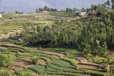 Terrace Farming, Marayoor, Idukki District, Kerala, India, Asia Impressão fotográfica por Balan Madhavan
