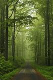 Beech Forest, Erzgebirge, Saxony, Germany, Europe Photographic Print by Jochen Schlenker