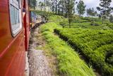 Train Journey Through Tea Plantations Photographic Print by Matthew Williams-Ellis