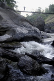 Trek Path to Kunthipuzha, Silent Valley National Park, Palakkad District, Kerala, India, Asia Impressão fotográfica por Balan Madhavan