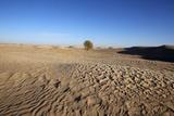 Sahara Landscape, Douz, Kebili, Tunisia, North Africa, Africa Stampa fotografica di  Godong