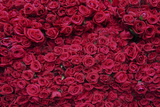 Roses for Sale, Delhi, India, Asia Photographic Print by Balan Madhavan