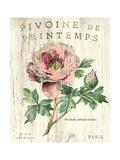 Pivoine de Printemps Premium Giclee Print by Sue Schlabach