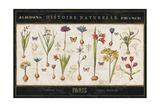 Histoire Naturelle I Reproduction giclée Premium par  Pela Design