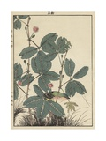 Sensitive Plant, Olive Sparrow Reproduction procédé giclée par Imao Keinen