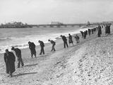 Beachcombers Searching Brighton Beach for Treasure Impressão fotográfica