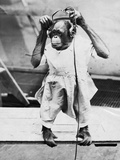 Orangutan Listens to Headphones Reproduction photographique