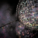 Chandelier Photographic Print by Ursula Abresch