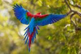 The Parrot Lámina fotográfica por Art Wolfe