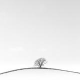 On the Crest Fotografie-Druck von Doug Chinnery