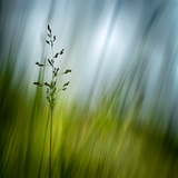 Morning Grass Fotoprint van Ursula Abresch
