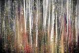 Pink Autumn Premium Photographic Print by Ursula Abresch