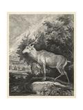 Woodland Deer II Posters af  Ridinger