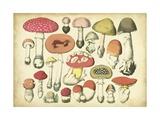 Vintage Mushroom Chart Lámina giclée prémium por  Vision Studio